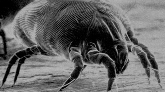 chem-dry-dust-mite-treatment-ft